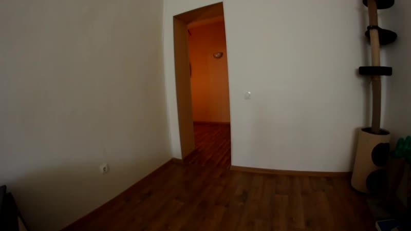 Гигантская_кошка_в_моей_квартире_Giant_Cat_In_My_Apartment