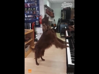 Scary mommy time out - dog passionately sings the blues.mp4