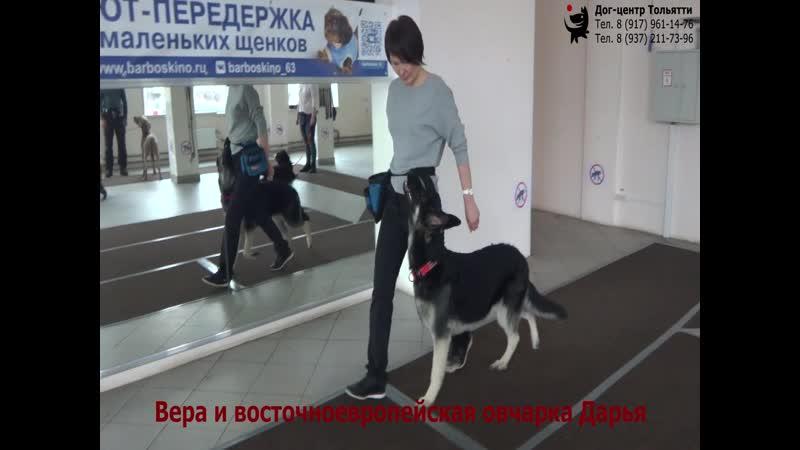 Вера и восточноевропейская овчарка Дарья Занятие в группе общий курс дрессировки обучение собаки движению рядом Тольятти 2