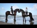 Работа с Фризами Красивая съемка лошадей на океане Fresian Horses