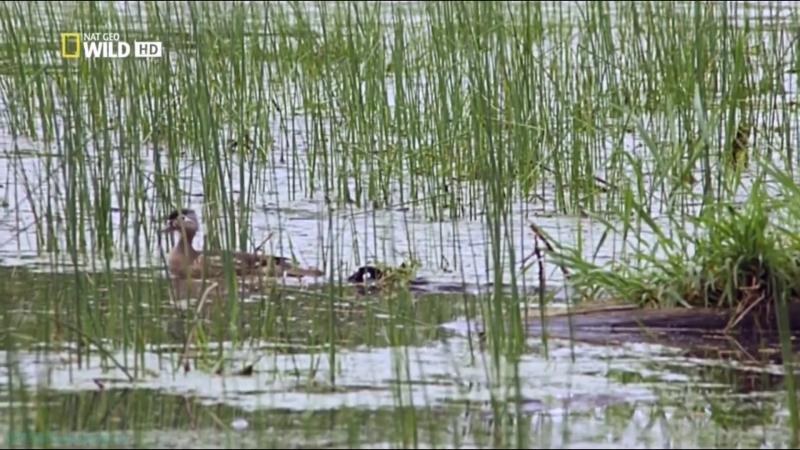 Дикая природа Миссисипи 2012