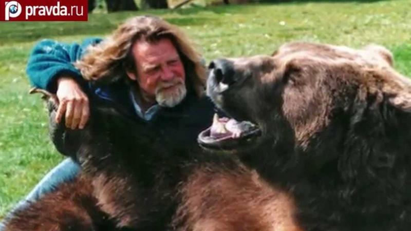 Как подружиться с медведем