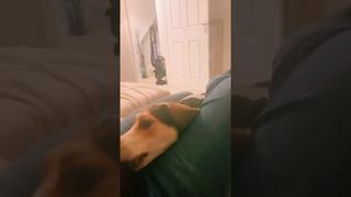 Собачка подкрадывается к игрушке в замедленной съемке     ViralHog