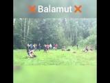 Тема 10 на 10 Balamut
