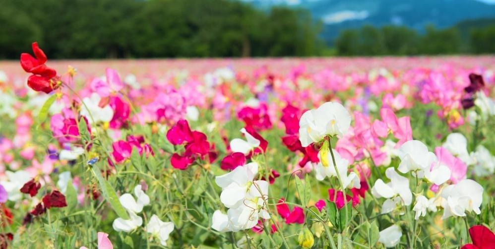 Удобрение растений происходит, когда пыльца из мужской части растения помещается в женскую часть растения, часто с помощью пчел или других насекомых.