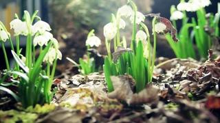 Фредерик Шопен - Весенний вальс - Весняний вальс - Chopin - Spring Waltz