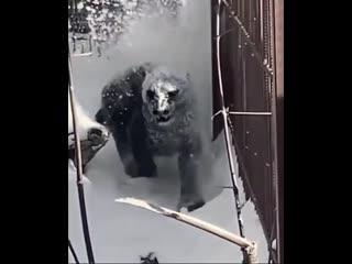 Если на вас напала пантера.