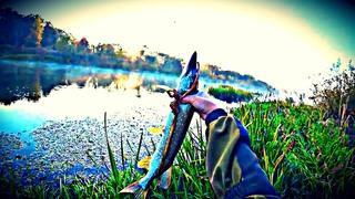 Я этот Осенний Жор Щуки 2020 коряги шатал |  Рыбалка на Спиннинг