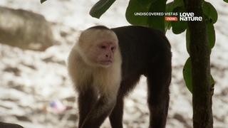 Дикая территория / Коста-Рика: От небес к морю