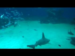 Shark-Eilat