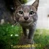 Типичный кот;)