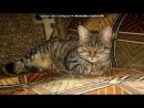 «моя любимая кошка Мася» под музыку Ритм дорог - Моя кошечка.