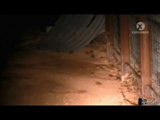 Animal Planet Вторжение паразитов Тараканы мыши и еноты