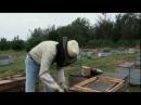 Arı Öldürdü? Kim BBC Belgesel YouTube