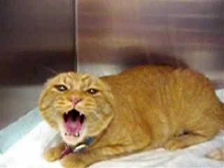 Сумасшедший кот по кличке Бургер