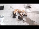 Mother cat with kittens came to old friend Кошка привела котят к своему другу