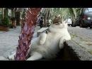 Галерея прикольных кошек Прикольное видео про кошек Приколы с кошками Funny cats compilation