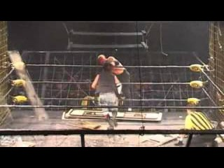 CZW. Cage Of Death 11