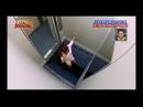 Жесткий японский розыгрыш в лифте. Ржака. Прикол над людьми