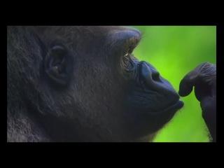 Смотреть Очень Красивое Видео Музыка Песня Новинка