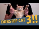 DUBSTEP CAT 3