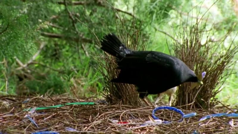 BBC Эти загадочные животные 03 Удивительные способы размножения