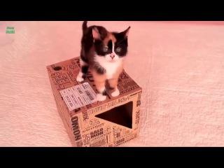 Неудачные прыжки котов юмор 100% Все гениальное - просто