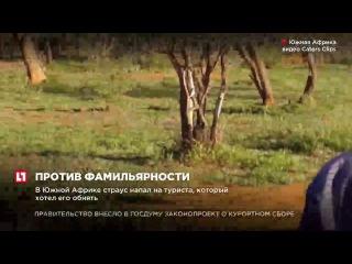 В Южной Африке страус напал на туриста, который хотел его обнять