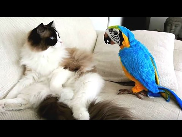 Try Not To Laugh Challenge - Funny bird videos awesome compilation 2017