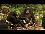 «Самые странные в мире: Странная любовь» (Документальный, природа, животные, 2011)