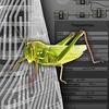 Grasshopper: Параметрика
