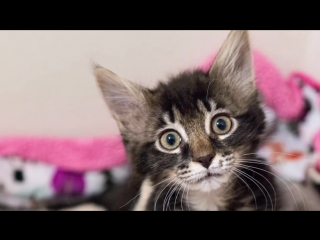 Two Orphan Kittens Become Best Friends