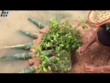 Amazing Video The first Trap Can Catch Alot of fish &amp Crabs And Eels By 5 Bambo With deep Hole