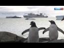 """Самой густо населенной антарктической станции """"Беллинсгаузен"""" исполнилось 50 лет"""