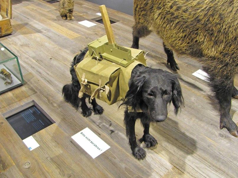 Военно-исторический музей вооружённых сил Германии, изображение №4