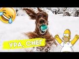 Как собаки реагируют на снег?