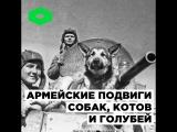 Военные подвиги животных | ROMB