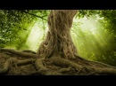 Relaxing Fantasy Music: Soothing Sleep Music, Peaceful Music, Calming Harp Music ★88