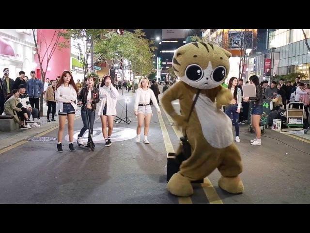 JHKTV] 신촌명물고양이댄스 sin chon special cat k pop dance dance