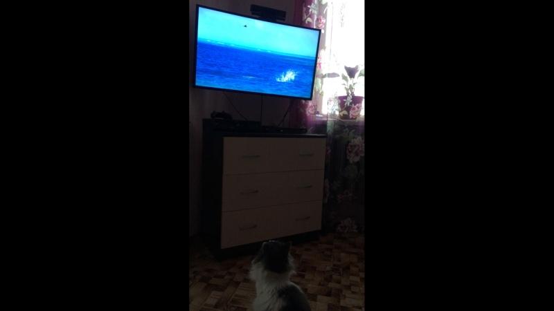 Мартин смотрит BBC, Голубая планета 2.