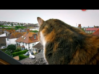 BBC. Кошачьи тайны _ Cat Watch 2014_ The New Horizon Experiment, 1 серия из 3