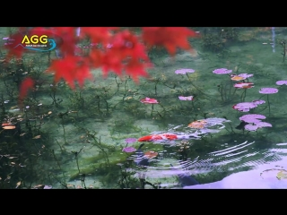 Пруд Моне в Японии モネの池 The pond,such as Monet paintings (Shot on RED EPIC)