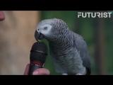 Самый умный попугай