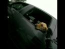 Привет собачка 🐶