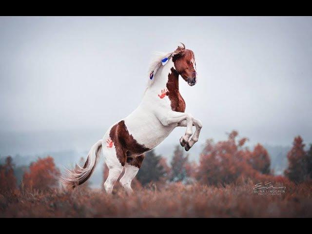 ~ Конный спорт ~ 140 - IOWA ~ Equestrian sport ~