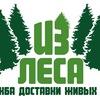 """Доставка живых Ёлок """"Из леса"""", г. Тюмень"""
