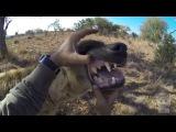 Гиены - милые, забавные и смешные. Смех гиены. (Животные №72)
