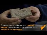 В Китае нашли кладку яиц птерозавра возрастом около 120 миллионов лет