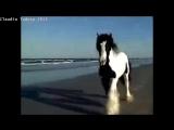 Красивые лошадки