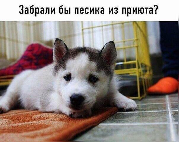 Фото №456543558 со страницы Нади Касиловой